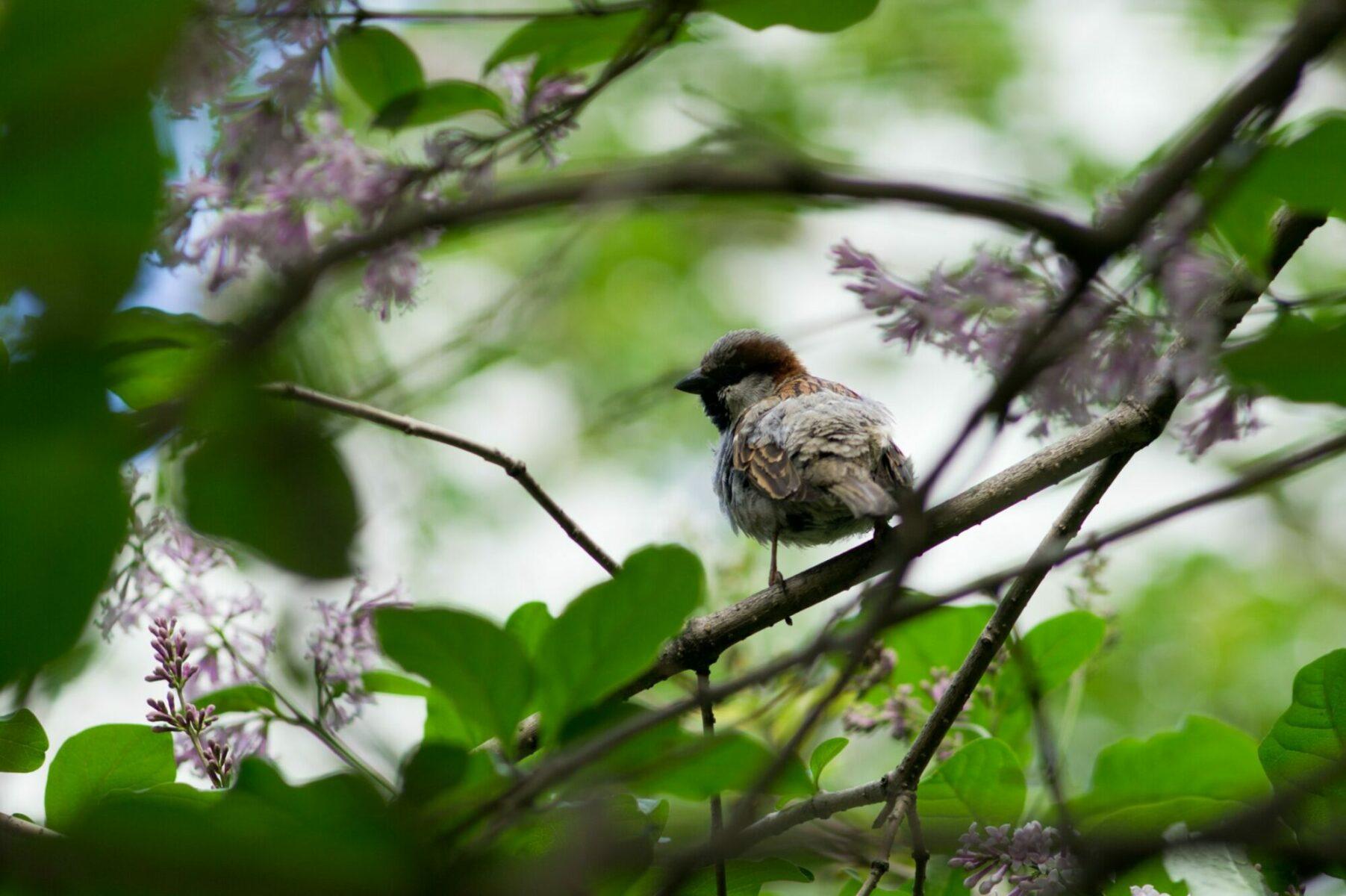 birdwatching--2048x1363